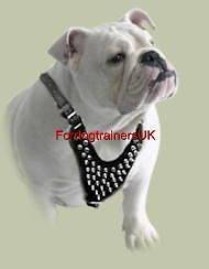 Spiked Padded Leather Dog Harness H9 English Bulldog