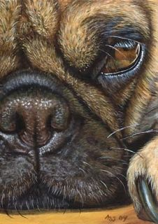 Akiko Original ACEO Painting of A Pug Dog by Award Winning Artist