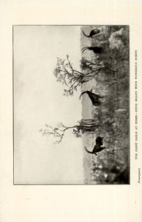 1922 1st Statham Through Angola Big Game Hunting Luanda Coanza Congo