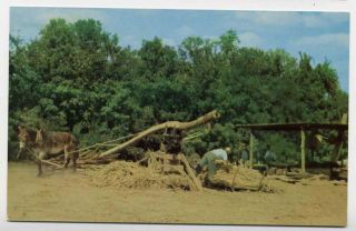 Asheville Making Sorghum Molasses Mule Sugar Cane Press Postcard