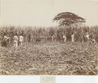 Cuba workers on sugar cane plantation antique photo by Blain