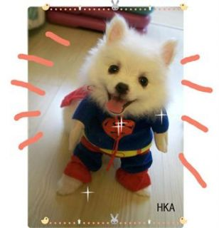 Size Christmas superman shirt Hoodie Tee small dog pet clothes Apparel
