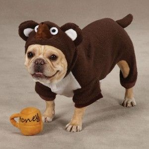 Zoey Lil Honey Bear Halloween Dog Costume Brown w/ FREE Honey Pot Toy